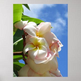 Plumeria hawaïen posters
