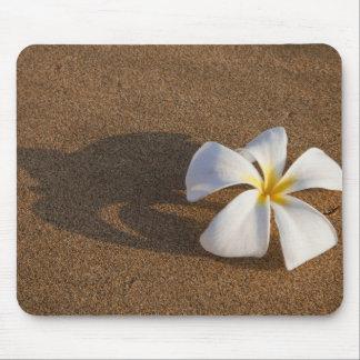Plumeria sur la plage sablonneuse, Maui, Hawaï, Et Tapis De Souris