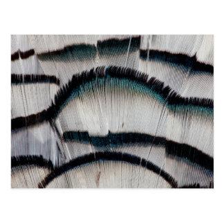 Plumes argentées de faisan carte postale