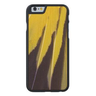 Plumes de Bowerbird éventées par jaune Coque Mince En Érable iPhone 6