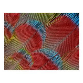 Plumes Faucon-Dirigées rouges de perroquet Carte Postale