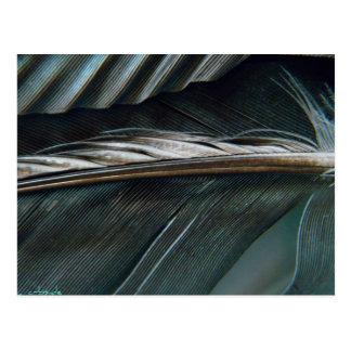plumes noires et blanches carte postale