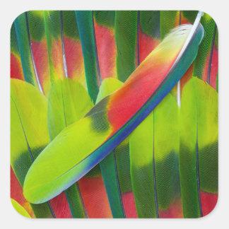 Plumes vertes de perroquet d'Amazone Sticker Carré