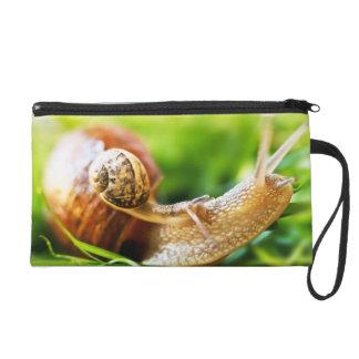 Pochettes Avec Dragonne Fermez-vous du bébé escargot sur l'escargot adulte