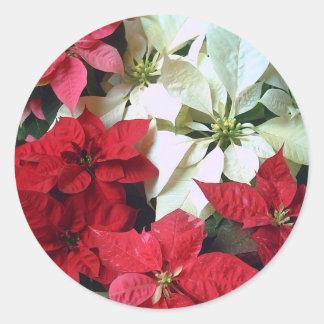 Poinsettias mélangées 1 de couleur sticker rond