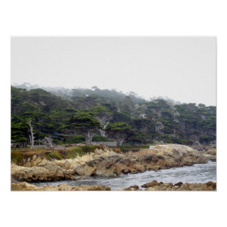 Point de la Chypre sur la péninsule de Monterey Affiches