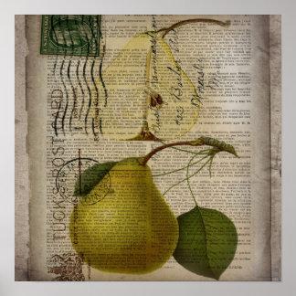 poire botanique française vintage moderne de fruit poster