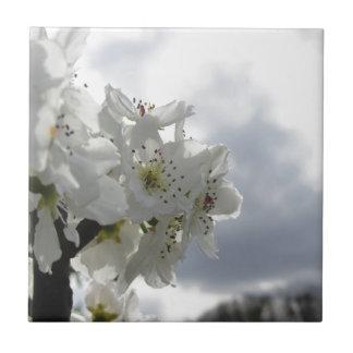 Poirier de floraison contre le ciel nuageux petit carreau carré