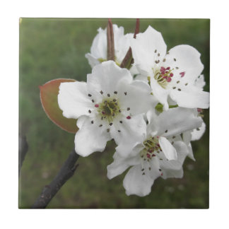 Poirier de floraison contre le jardin vert petit carreau carré