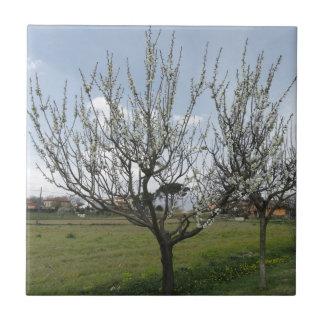 Poirier de floraison dans le jardin Toscane, Petit Carreau Carré