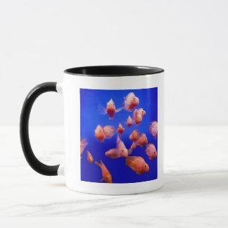 Poisson rouge 2 tasse