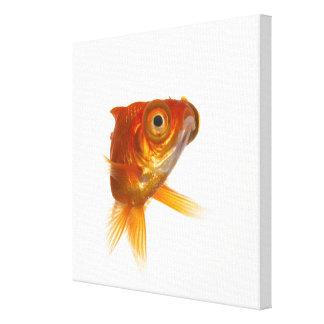Poisson rouge impressions sur toile poisson rouge for Poisson rouge gros yeux