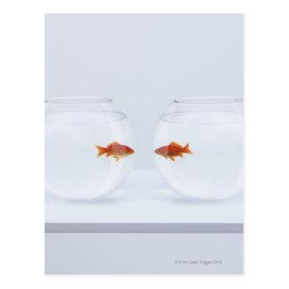 Poisson rouge dans des bocaux à poissons distincts cartes postales
