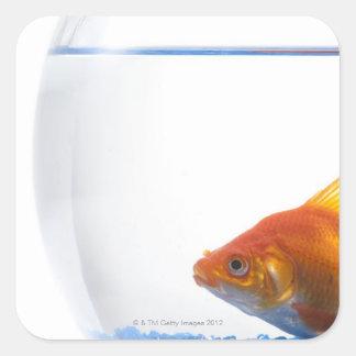 Fournitures bocal poissons pour loisirs cr atifs zazzle for Acheter poisson rouge 77