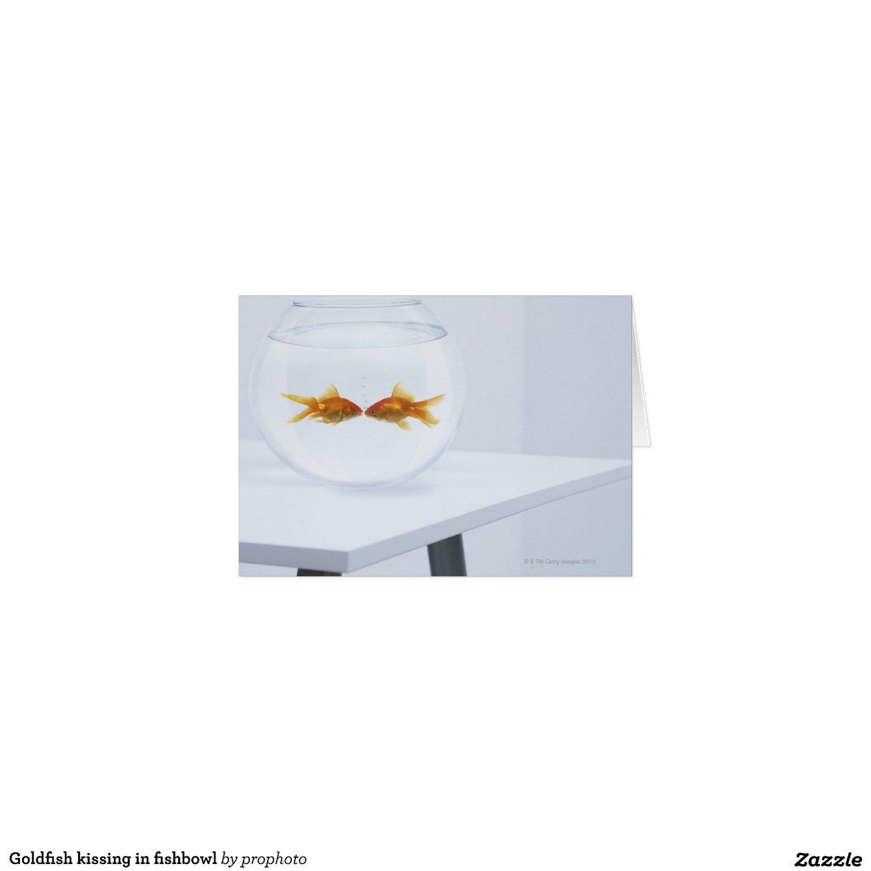 Poisson rouge embrassant dans le bocal poissons cartes for Poisson rouge a acheter