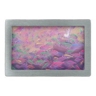 Poissons au néon dans un aquarium boucle de ceinture rectangulaire