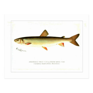 Poissons d'Adirondack Frost Carte Postale