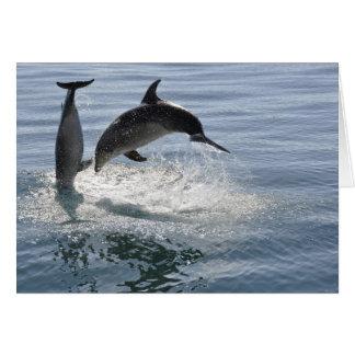 poissons de dauphin jouant - carte vierge