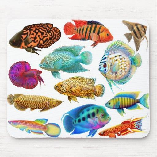 Poissons d 39 eau douce mousepad d 39 aquarium zazzle for Poisson aquarium douce