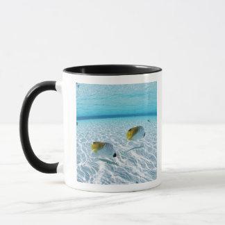 Poissons en mer 2 mug