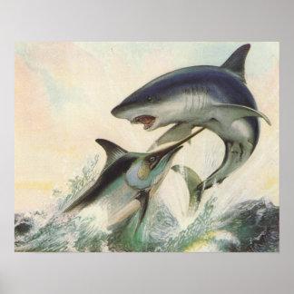 Poissons - Marlin noir et requin de Mako Posters