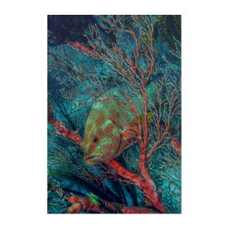 Poissons se cachant dans la fan de mer art mural en acrylique