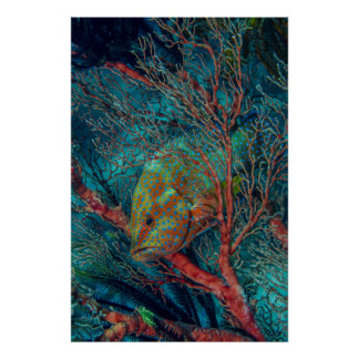 Poissons se cachant dans la fan de mer poster