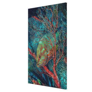 Poissons se cachant dans la fan de mer toile