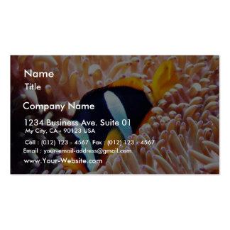 Poissons tropicaux de poissons de clown carte de visite standard