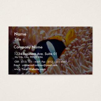 Poissons tropicaux de poissons de clown cartes de visite