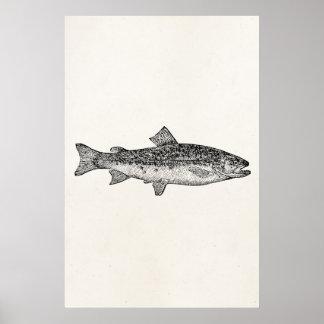 Poissons vintages d'orphie - blanc aquatique de affiches