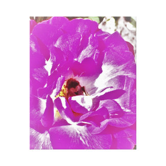 Pollination Toiles