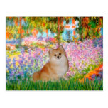 Pomeranian 3 - Jardin Cartes Postales
