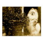 Pomeranian mignon carte postale