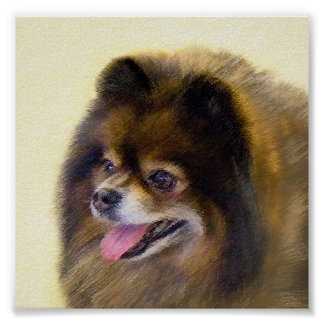 Pomeranian (noir et Tan) Poster