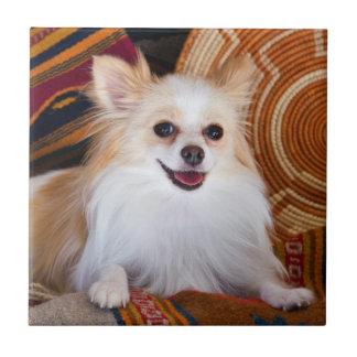 Pomeranian se trouvant sur des couvertures petit carreau carré