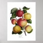 Pommes Affiche