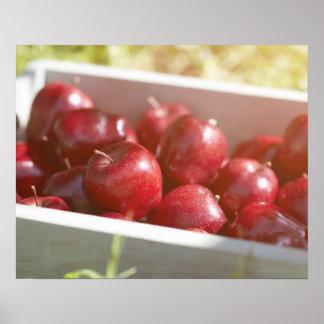 Pommes fraîchement sélectionnées dans le plateau posters