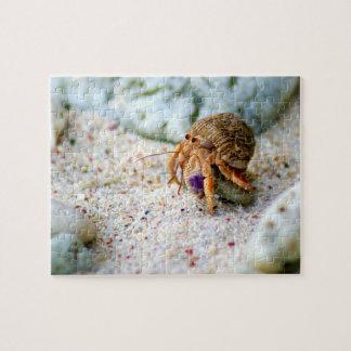 Poncez le crabe, Curaçao, îles des Caraïbes, photo Puzzles