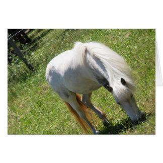 Poney blanc frôlant dans la carte de champ,