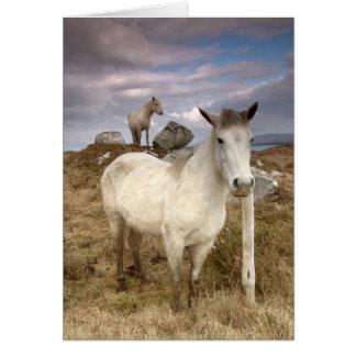 Poneys de Connemara. Carte par le cARTerART