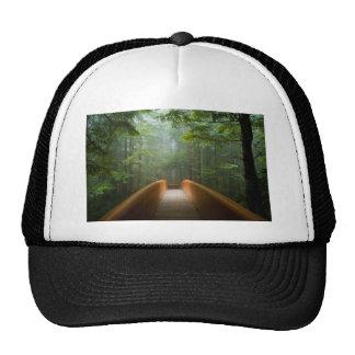 Pont de forêt de séquoia casquette