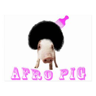 Porc d'Afro Carte Postale
