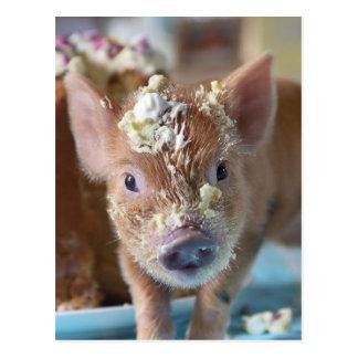 Porc drôle et le gâteau carte postale