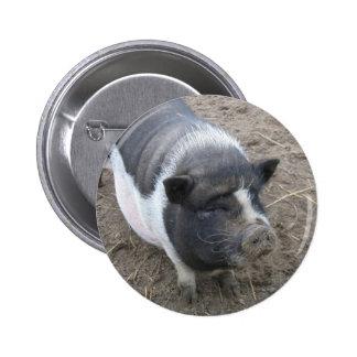 Porc gonflé par pot badges