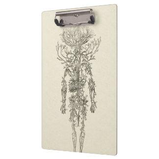 Porte-bloc Anatomie humaine l'illustration antique d'artères
