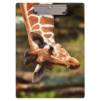 Porte-bloc Brown mignon et portrait blanc de visage de girafe
