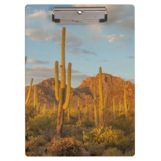 Porte-bloc Cactus de Saguaro au coucher du soleil, Arizona