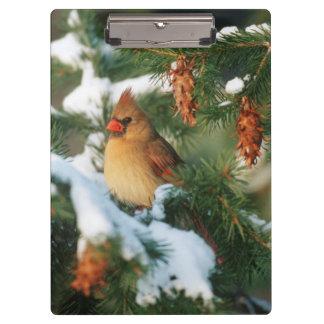 Porte-bloc Cardinal du nord dans l'arbre, l'Illinois