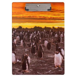 Porte-bloc Colonie de pingouin au coucher du soleil, les